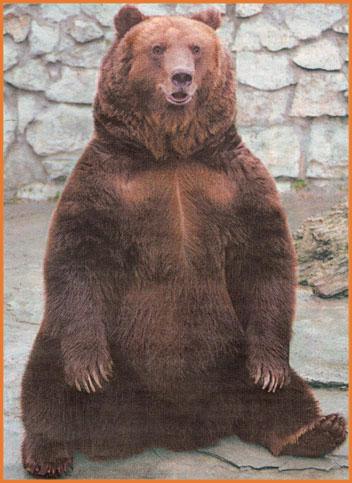 Bear_ww