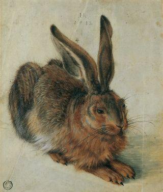 Hare-1528