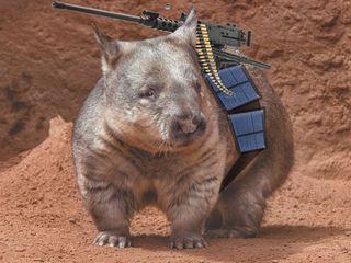 Solar-combat-wombat