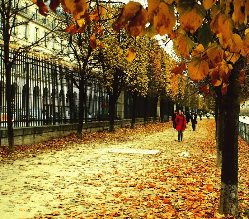 Autumn_Leaves_in_Paris