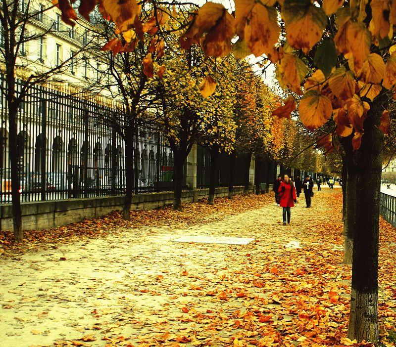 Autumn_Leaves_in_Paris
