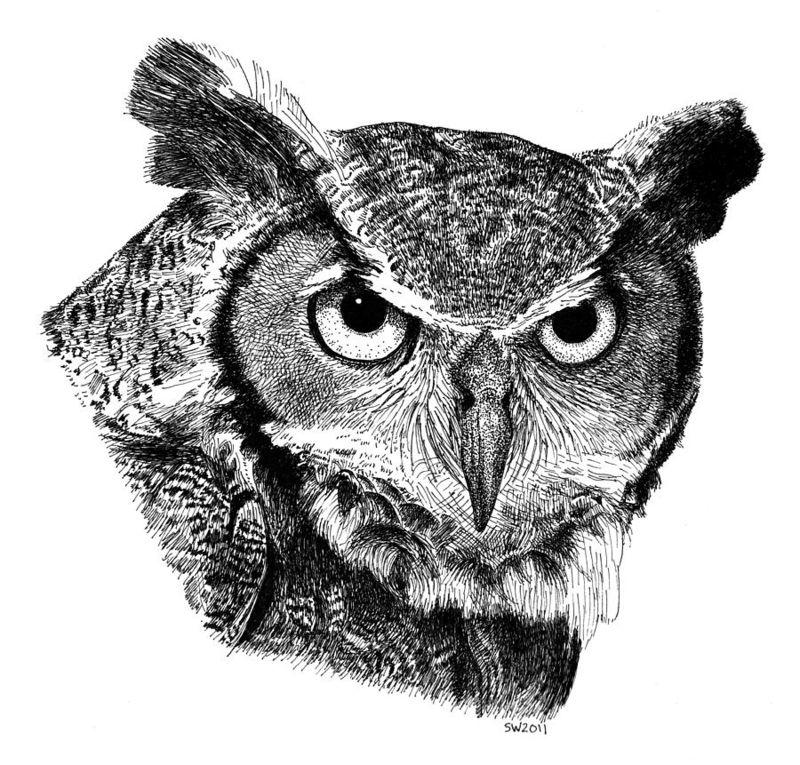 Great-horned-owl-scott-woyak
