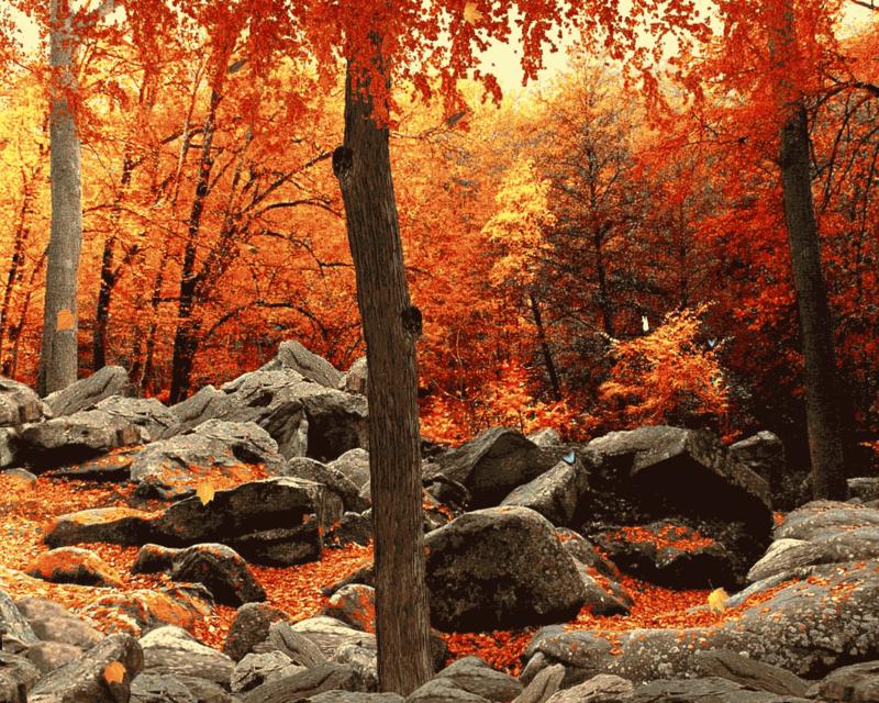 Autumn 2012