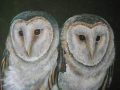 -owls-in-cahoots-sandra-peyrolle
