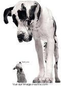 Petit_et_grand_chien