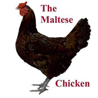 Maltesechicken