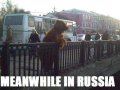 Russian_bear