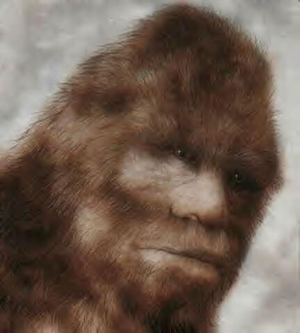 Bigfoot-sasquatch