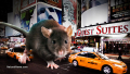 Giant-Rat-New-York-City