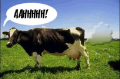 Farting_cow
